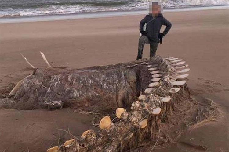 """""""Kjara"""" na obalu Škotske izbacila ostatke misterioznog stvorenja"""