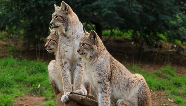 Dok je ljudska vrsta u karantini, životinje i biljke ponovno otkrivaju slobodu