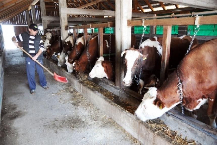 Uvoze meso iz zaraženih zemalja a naše propada