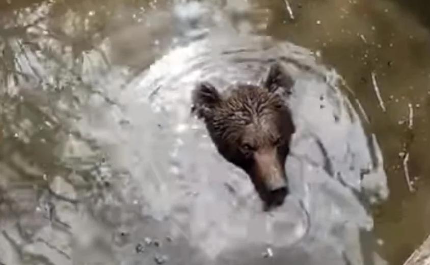 Medvjed upao u bunar u Hercegovini, spasili ga dobri ljudi