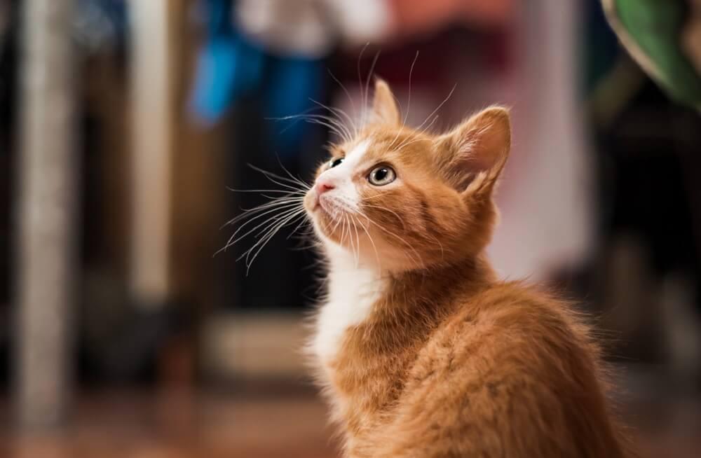 Iznenadiće vas pravi razlog zbog kojeg su se drevni Egipćani divili mačkama