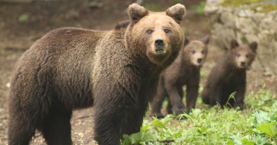 Nestvarne ljepote Nacionalnog parka Sutjeska okom lovočuvara Željka