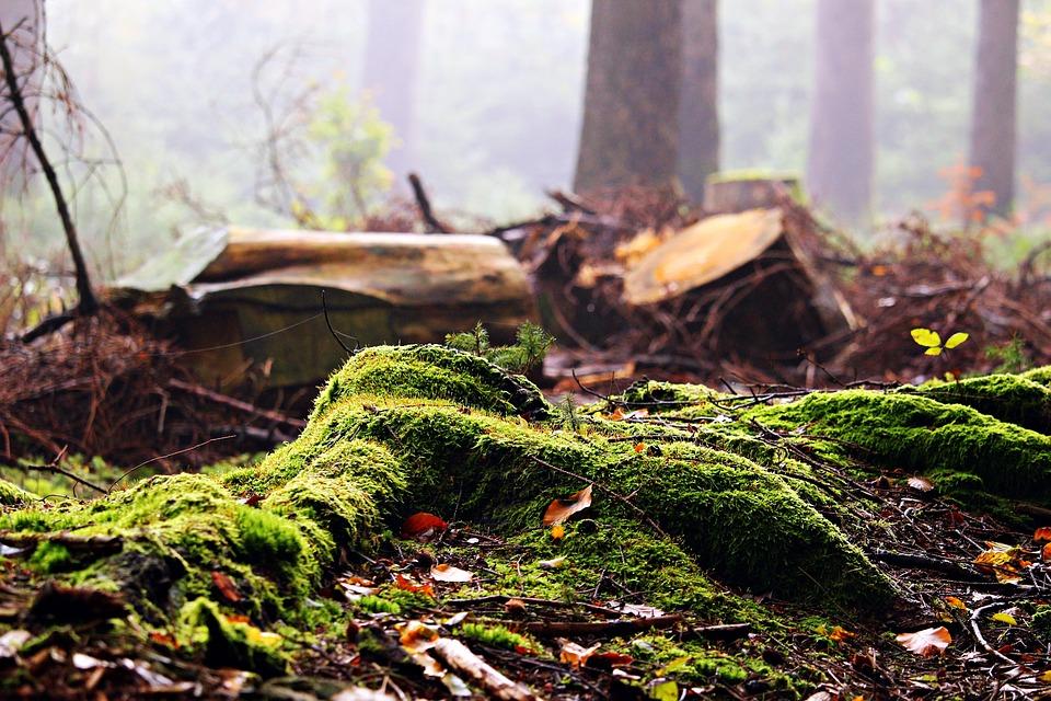 Za milionsku krađu šume platili kaznu od 40.000 KM